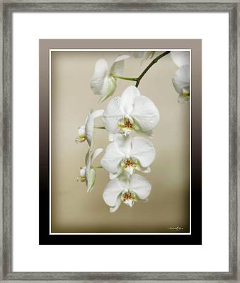 Framed Print featuring the photograph Orchid Spray by Linda Olsen