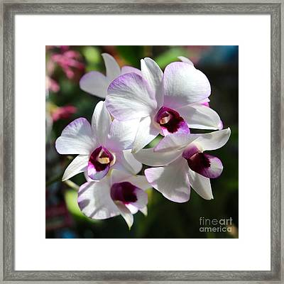 Orchid Square 2 Framed Print