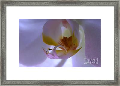 Orchid Treasure Framed Print
