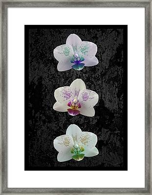 Orchid Trio Framed Print