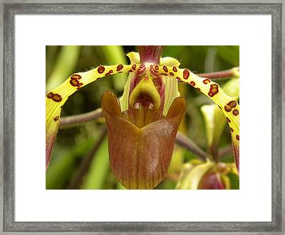 Framed Print featuring the photograph Orchid V by Fanny Diaz