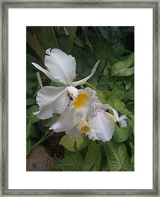 Framed Print featuring the photograph orchid VIII by Fanny Diaz