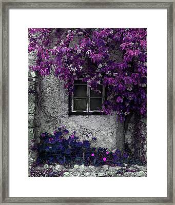 Orchid Vines Window And Gray Stone Framed Print