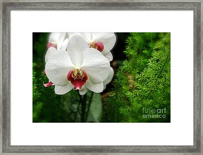 Orchid White Framed Print