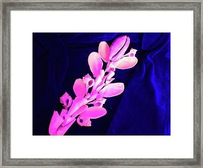 Orchidaceae Shell Framed Print by Arlin Jules