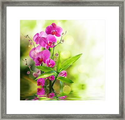 Orchidaceae Framed Print