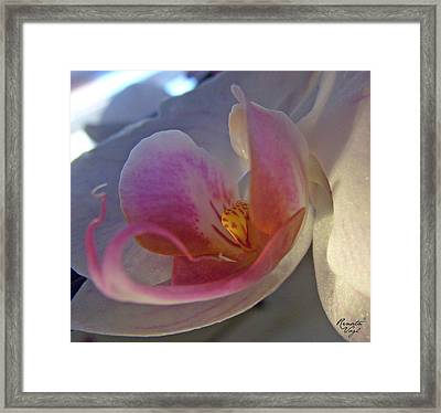 Orchidee Framed Print by Renata Vogl