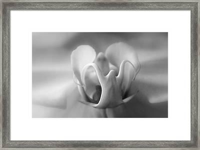 Ghostly Grandeur Framed Print