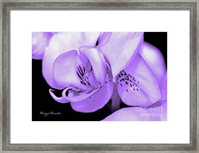 Orchid...orchid.... Framed Print