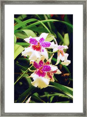 Framed Print featuring the painting Orchids 1 by Sandy MacGowan