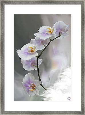 Orchids 2010 Framed Print by Kevin  Sherf