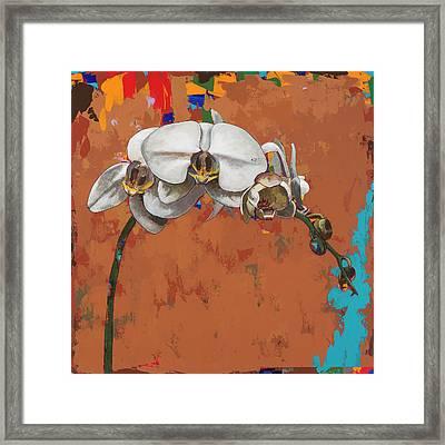 Orchids #4 Framed Print