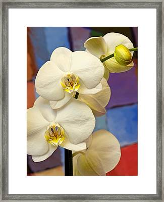 Orchids And Art Framed Print by Lutz Baar