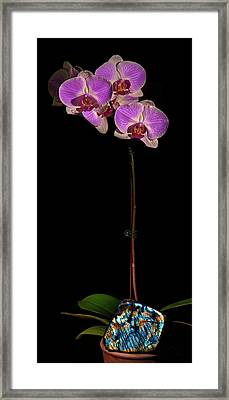 Orchids And Labradorite Framed Print