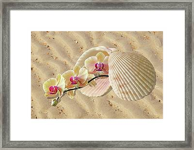 Orchids And Shells On The Beach Framed Print by Gill Billington
