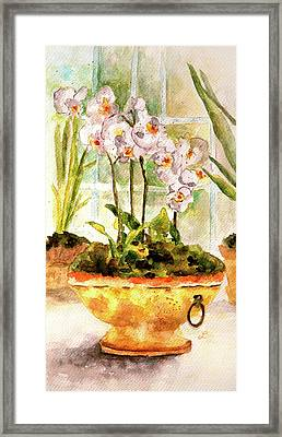 Orchids By The Window Framed Print