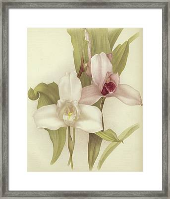 Orchids Framed Print by English School