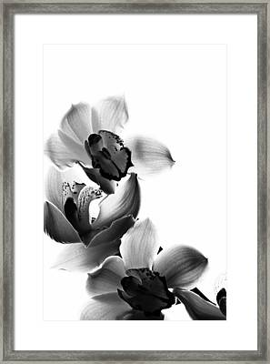 Orchids Framed Print by Fine Arts