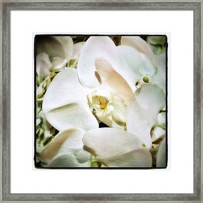Framed Print featuring the photograph Orchids For His Majesty. In Loving by Mr Photojimsf