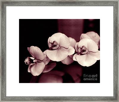 Framed Print featuring the photograph Orchids Hawaii by Mukta Gupta