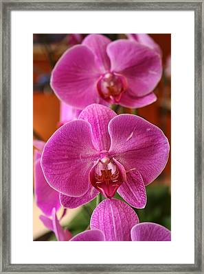 Orchids In Bloom Framed Print by Alexander Mendoza