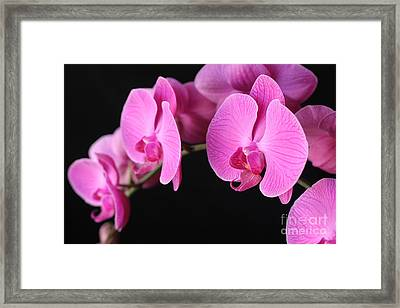 Orchids In Bloom Framed Print by Angie Bechanan