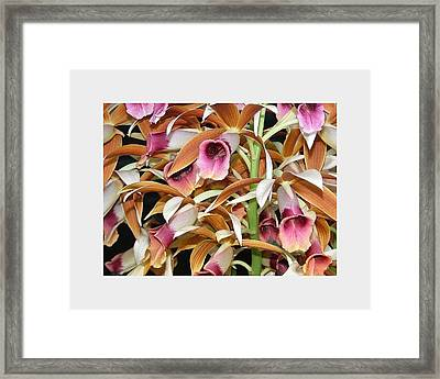 Orchids In Bloom Framed Print by Mindy Newman