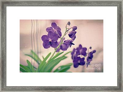 Framed Print featuring the photograph Orchids In Purple  by Ana V Ramirez
