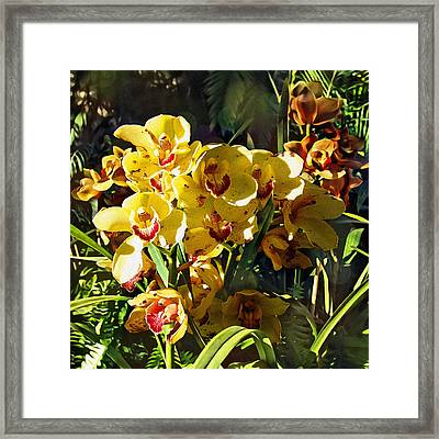 Orchids In Texture Framed Print
