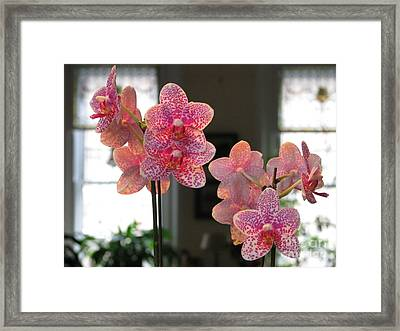 Framed Print featuring the photograph Orchids In The Parlor by Erik Falkensteen