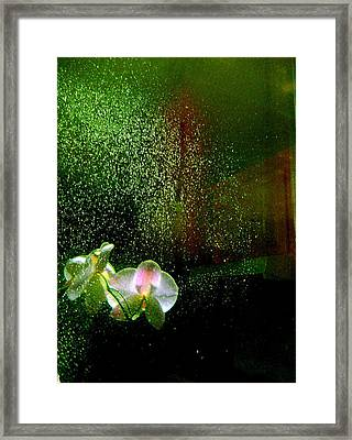 Orchids In The Rain Framed Print