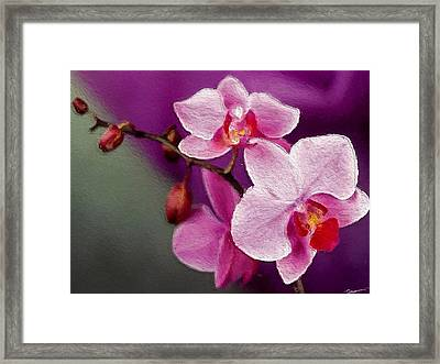 Orchids In Violets Framed Print by Anthony Fishburne