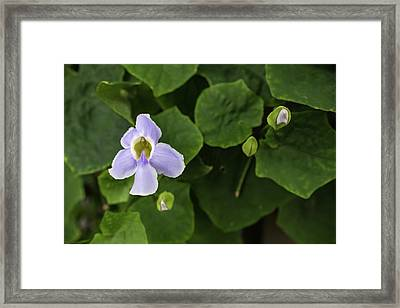 Orchids  Framed Print by Jingjits Photography