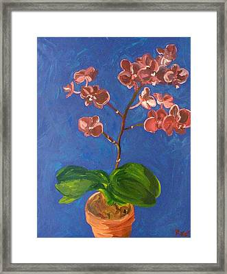 Orchids Framed Print by Joshua Redman