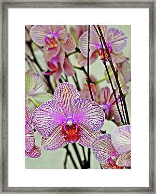 Orchids Framed Print by Maria Arango