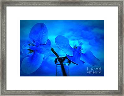 Orchids Of Blue Framed Print by Krissy Katsimbras