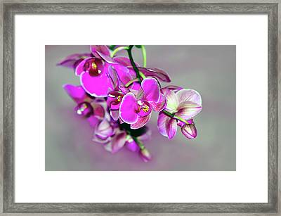 Framed Print featuring the photograph Orchids On Gray by Ann Bridges