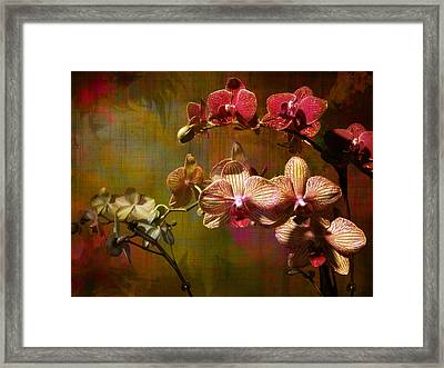 Orchids On Silk Framed Print