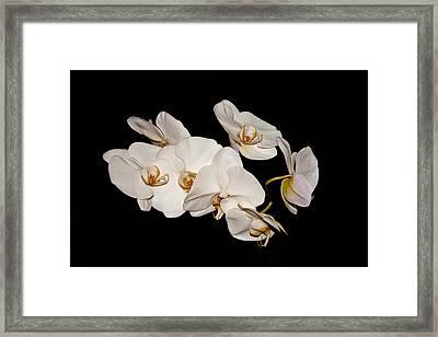 Orchids Framed Print by Pat Carosone