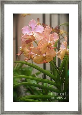 Framed Print featuring the photograph Orchids Peach by The Art of Alice Terrill