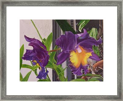 Orchids Framed Print by Robert Silvera