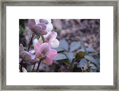Orchids Framed Print by Ron Smith