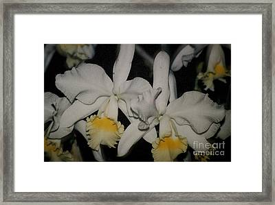 Framed Print featuring the photograph Orchids Satin by The Art of Alice Terrill