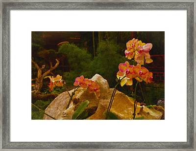 Orchids Framed Print by Stephen Campbell