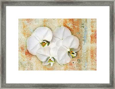 Orchids Upon The Rough Framed Print by Andee Design