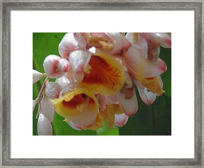 Orchids Framed Print by Ursula Wright