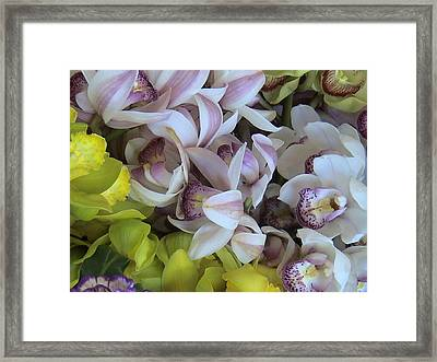 Orchids Framed Print by William Thomas