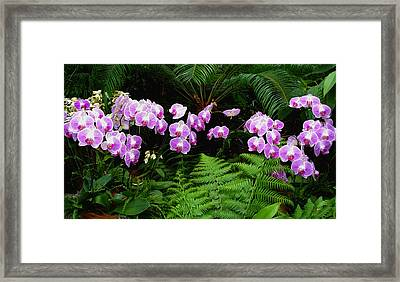 Framed Print featuring the photograph Orchids With Fern-panoramic by Margie Avellino