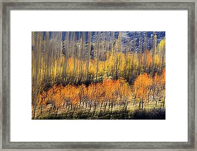 Ordered Framed Print by Robert Shahbazi