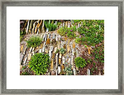 Orderly Mess - Impressions Of A Rock Garden Framed Print